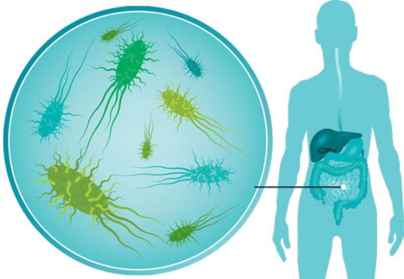 Good bacteria improve our brains